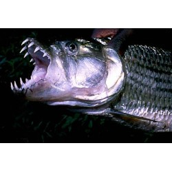 Listado de Monsterfish